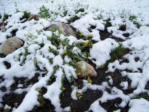 May 2007 Snow2